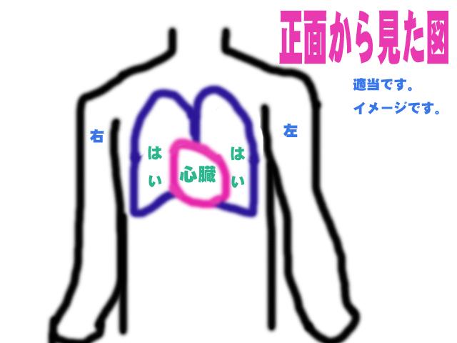 心臓の位置は、「左」でなく「真ん中でちょっと左より」