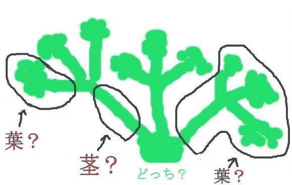 パセリの葉と茎? どこからどこまで?